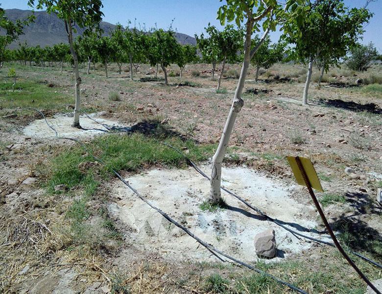 zeolite tree soil zeolite clinoptilolite specification physical properties zeoponic soil zeolite producer iran supplier